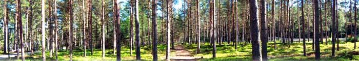 Бухгалтерія лісового господарства